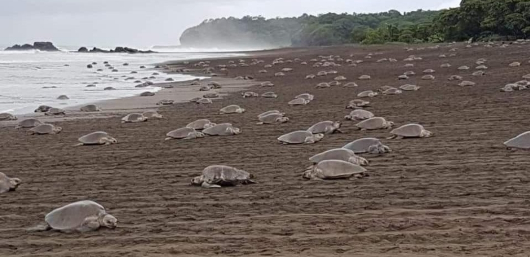 Ostional Turtle Reserve